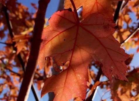 5 Home Maintenance Tips for the Fall Season